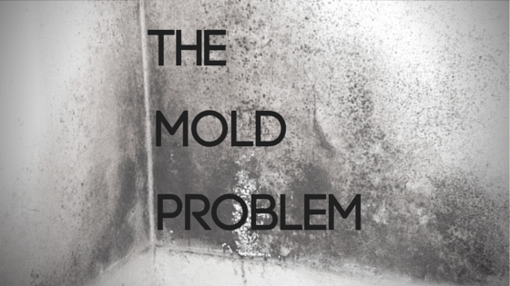 How-To: Take Care of a Mold Problem in Your Home