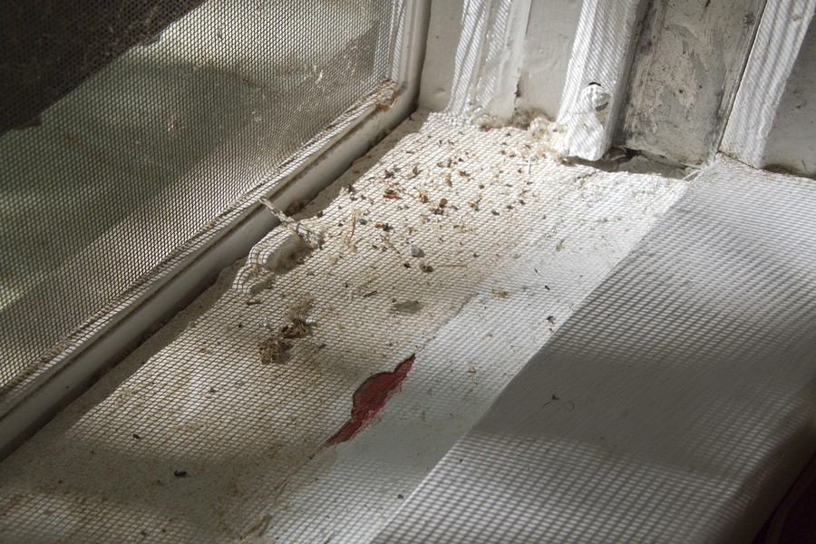 Asbestos Containing Building Materials & Lead Paint Surveys